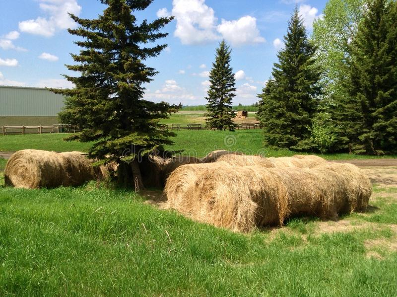 Paysage Alberta Hay photo stock