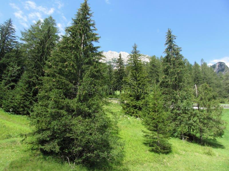 Paysage alpin avec les pâturages et les sapins verts contre les dolomites italiennes à l'été Vue de village de villa de La, Bolza photos libres de droits