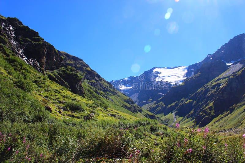 Paysage alpin fleurissant de pré photo libre de droits