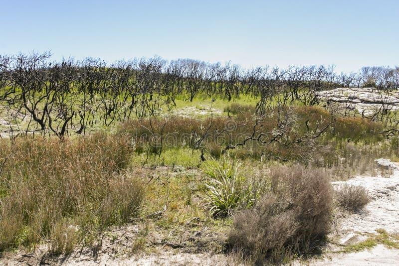 Paysage après le feu de brousse Parc national de Booderee NSW l'australie photographie stock libre de droits