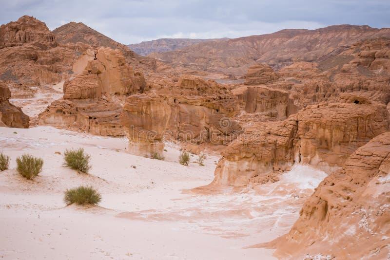 Paysage aride Sinai, Egypte de désert d'or photographie stock libre de droits