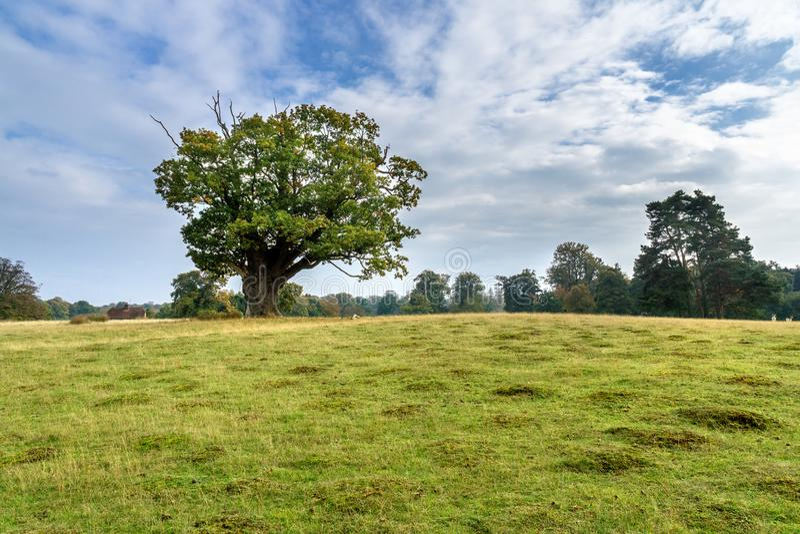 Paysage automnal - Angleterre photographie stock libre de droits