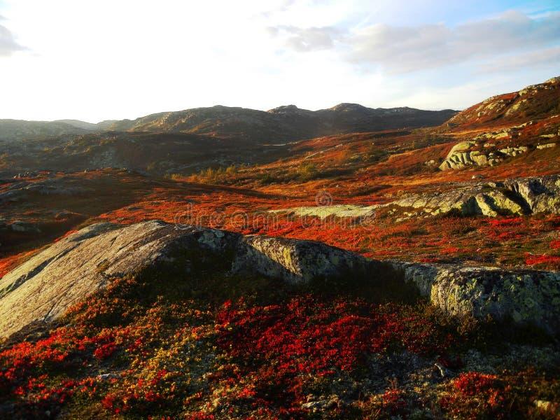 Paysage automnal en montagnes norvégiennes photos stock
