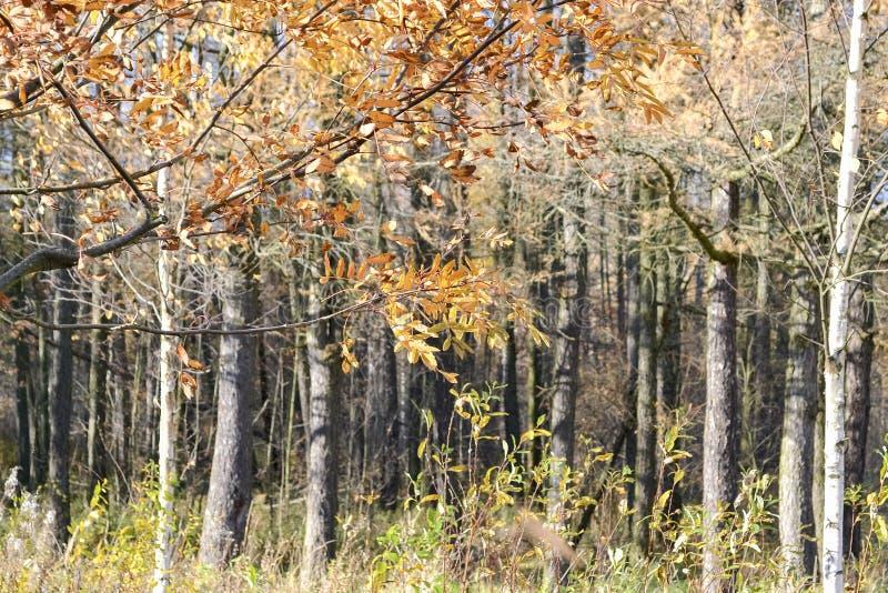Paysage avec des arbres d'automne image libre de droits