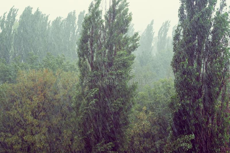 Paysage avec des arbres en tempête de pluie lourde d'été image libre de droits