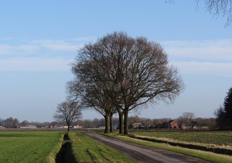 Paysage avec des arbres sans feuilles photo stock image - Arbres sans feuilles ...