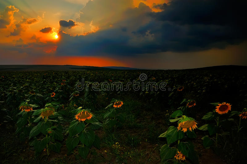 Download Paysage Avec Des Champs En été Au Coucher Du Soleil Photo stock - Image du nuages, crépuscule: 56476102