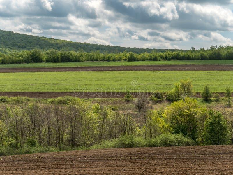 Paysage avec des champs et des espaces verts d'agriculture sur Sunny Day avec le ciel nuageux photos stock