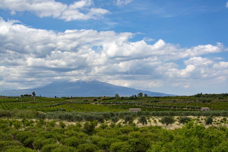 Paysage avec des plantations de citronniers d'orange et et vue sur le mont Etna, Sicile, agriculture en Italie image stock