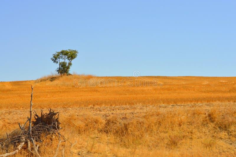 Paysage avec l'arbre solitaire sur l'horizon image libre de droits