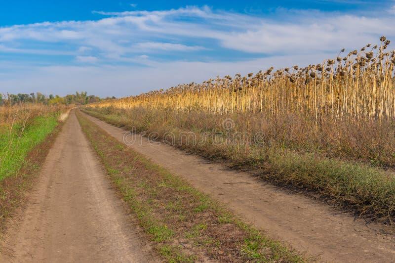 Paysage avec la route de terre au bord du gisement de tournesol images libres de droits