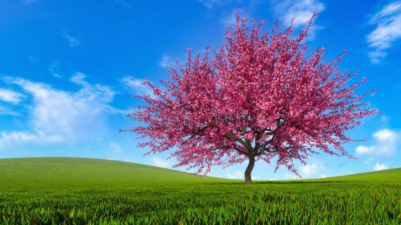 Paysage avec le cerisier de Sakura dans la pleine fleur images libres de droits