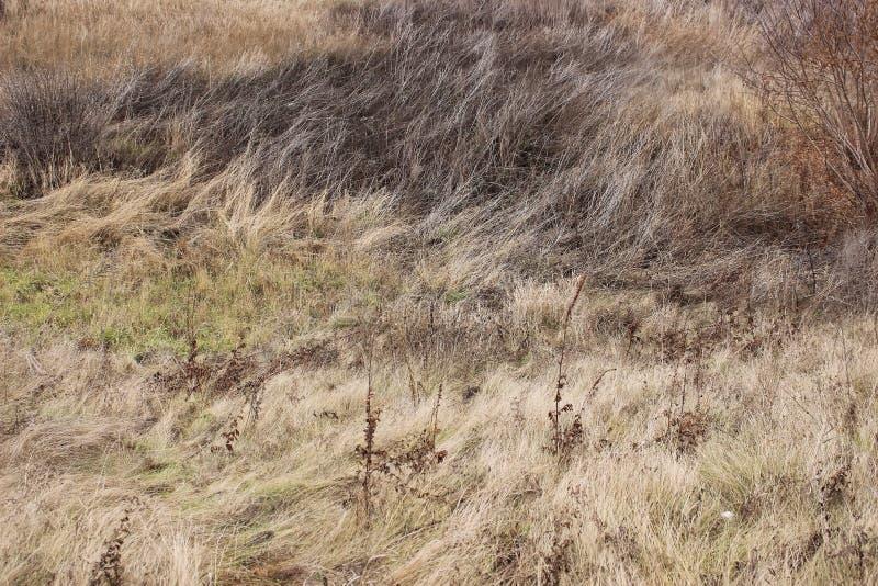 Paysage avec le champ d'automne photos libres de droits