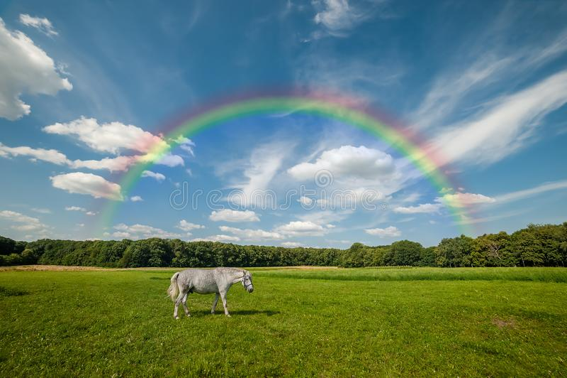 Paysage avec le cheval grisonnant photos libres de droits