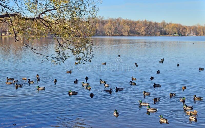 Paysage avec le lac près de l'église en automne photographie stock