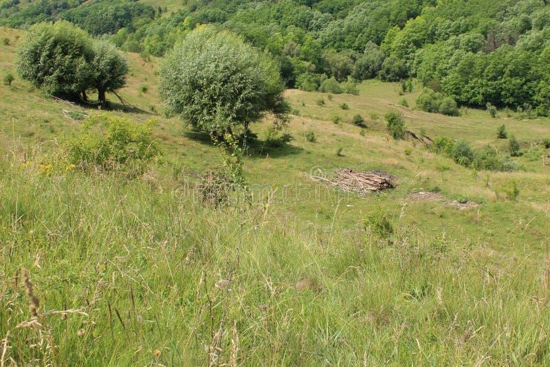 Paysage avec les arbres et la broussaille photos stock