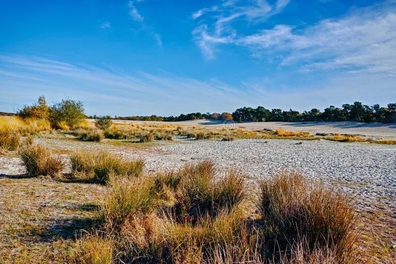 Paysage avec les dunes à sable jaune, arbres et usines et ciel bleu, photo libre de droits