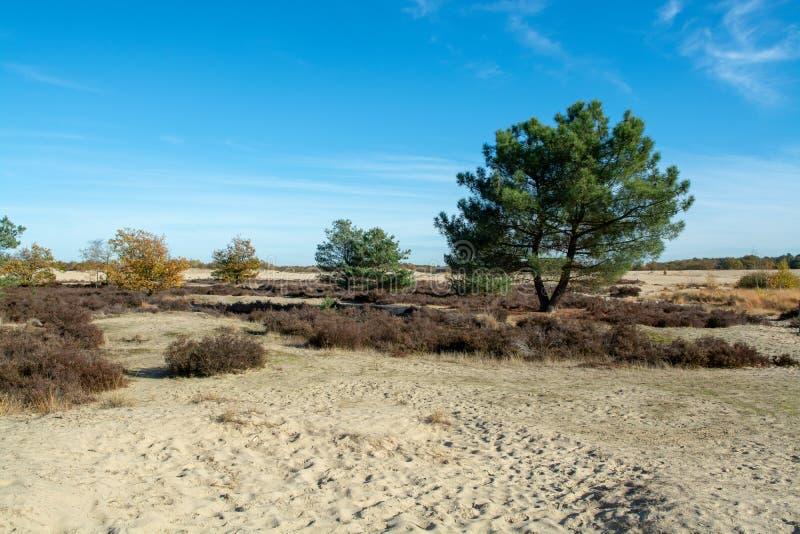 Paysage avec les dunes à sable jaune, les arbres et les usines et le ciel bleu, parc national Druinse Duinen dans le Brabant-Sept images libres de droits
