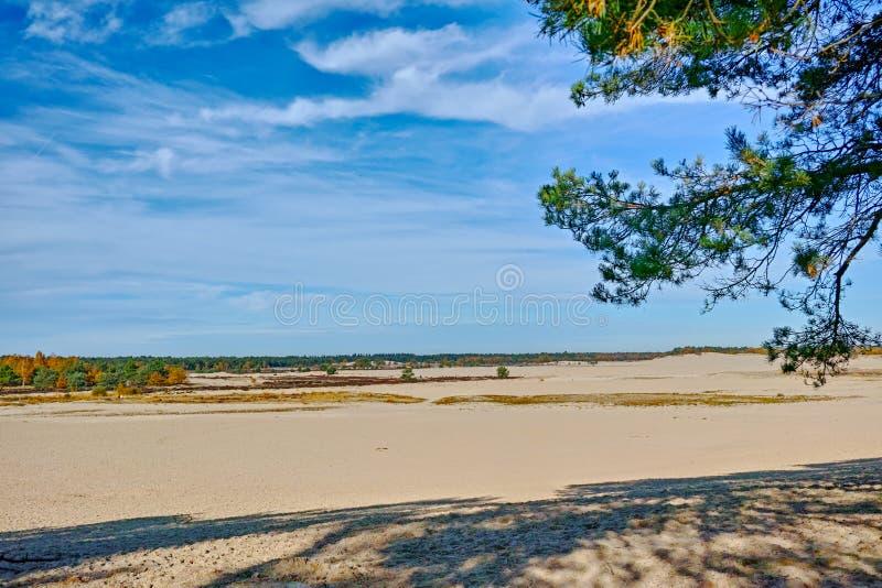 Paysage avec les dunes à sable jaune, les arbres et les usines et le ciel bleu, parc national Druinse Duinen dans le Brabant-Sept images stock