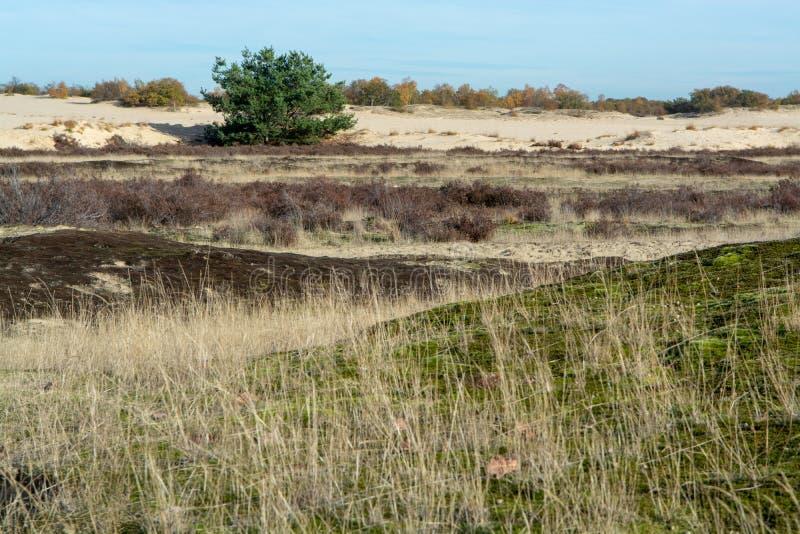 Paysage avec les dunes à sable jaune, les arbres et les usines et le ciel bleu, parc national Druinse Duinen dans le Brabant-Sept photographie stock libre de droits