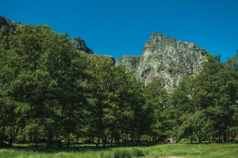 Paysage avec les falaises rocheuses couvertes par les buissons et la forêt images stock