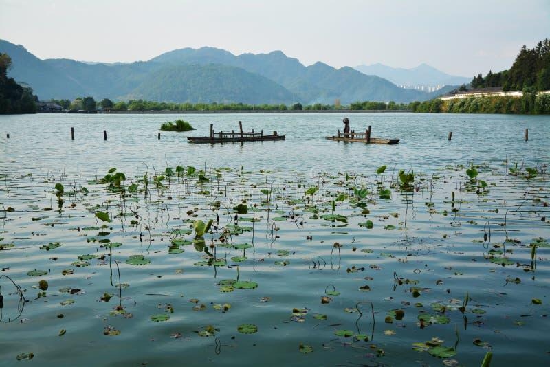 Paysage avec les feuilles et la montagne de lotus image libre de droits