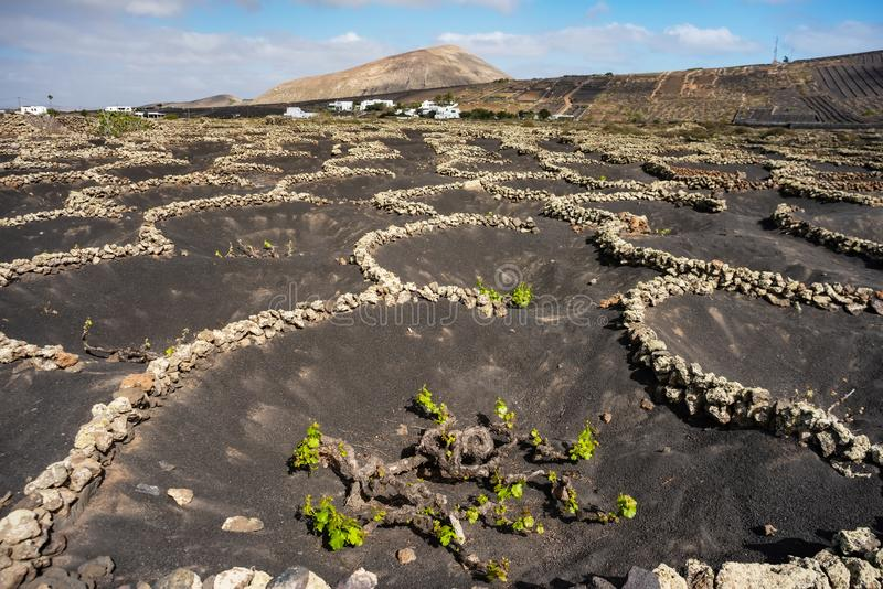 Paysage avec les vignobles volcaniques Lanzarote Les ?les Canaries l'espagne photos libres de droits