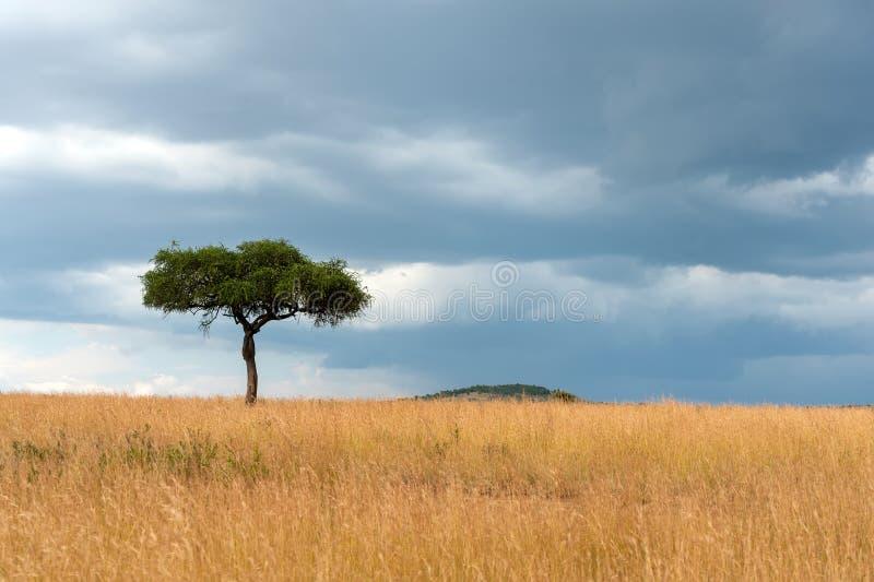 Paysage avec personne arbre en Afrique photos stock