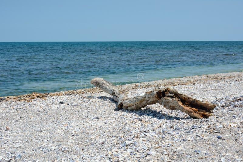 Paysage avec un arbre sec sur le bord de la mer photographie stock