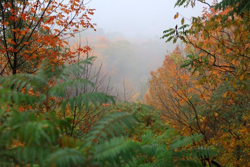 Paysage brumeux dans le temps d'automne images libres de droits