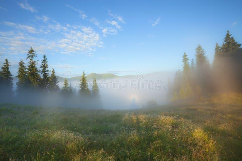 Paysage brumeux de campagne d'été de matin photos stock