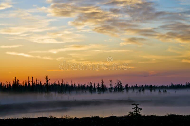 Paysage brumeux de début de la matinée avant aube dans la toundra en Russie du nord photographie stock