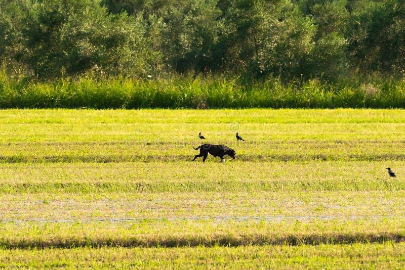 Paysage bucolique avec un chien dans une ferme photographie stock libre de droits