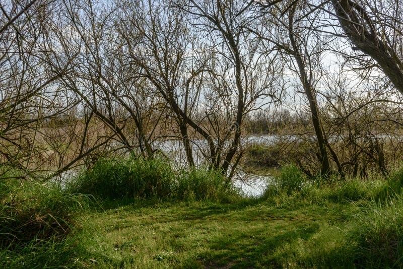 Paysage bucolique dans l'oasis de nature à la lagune, Volano, Italie photographie stock