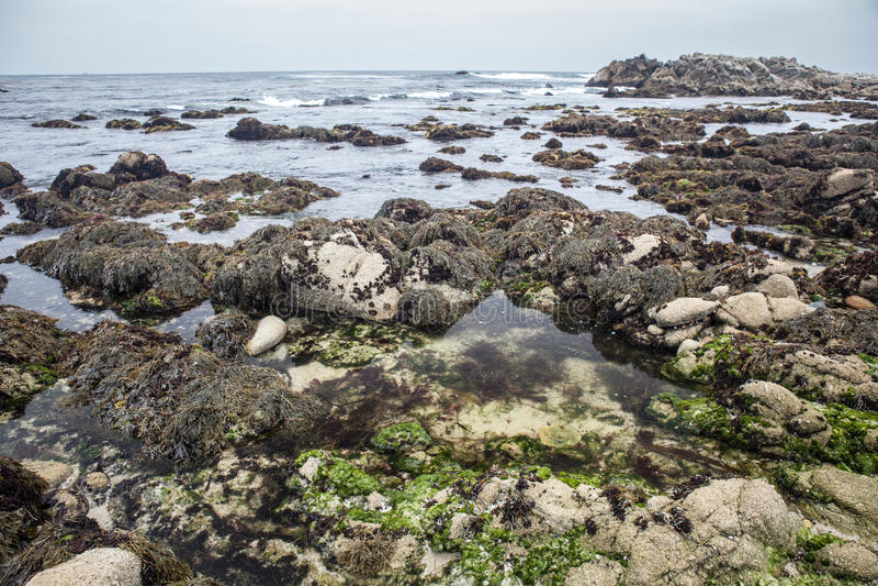 Paysage côtier de baie de Monterey photo stock