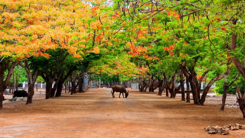 Paysage chez Tiger Temple images libres de droits