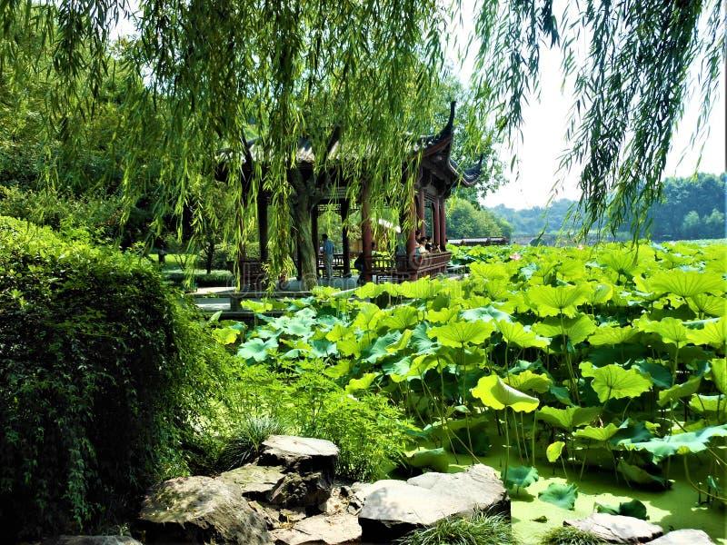 Paysage chinois, lac, fleurs de lotus et saule images stock