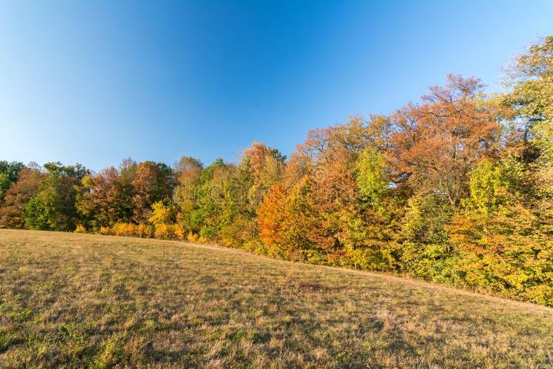 Paysage coloré d'automne avec les arbres et le pré photographie stock