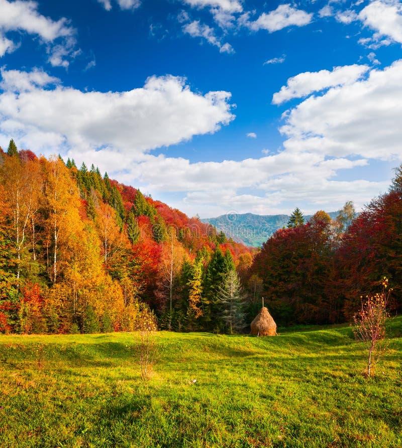 Paysage coloré d'automne dans les montagnes carpathiennes photo libre de droits