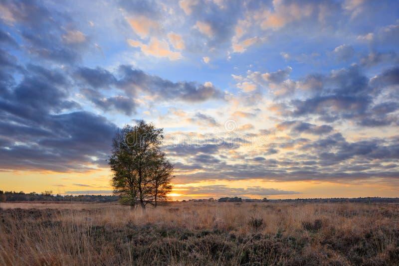 Paysage coloré de coucher du soleil d'automne à une bruyère tranquille, Goirle, Pays-Bas photos libres de droits