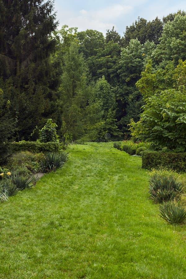 Paysage d'été avec la pelouse et le chemin verts à la forêt, f sélectif image libre de droits