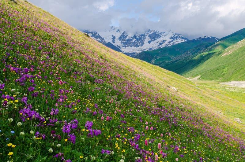 Paysage d'été avec la vallée de floraison de montagne en Géorgie images libres de droits
