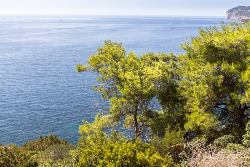 Paysage d'été avec les buissons verts sur l'île de la Sardaigne images stock