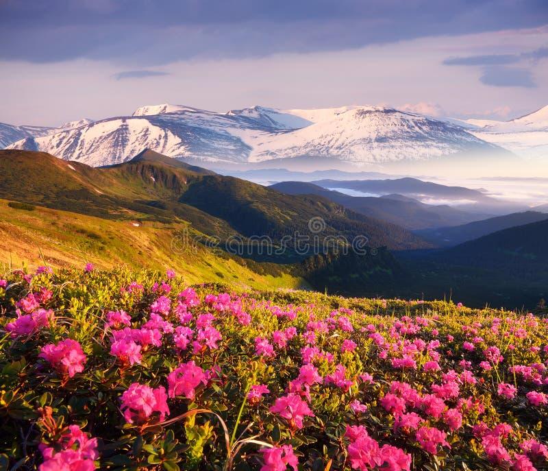 Paysage d'été avec les pentes de montagne fleurissantes photo libre de droits