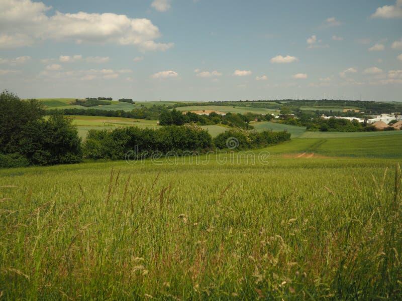 Paysage d'été avec les prés verts, le ciel bleu et les nuages blancs photos stock