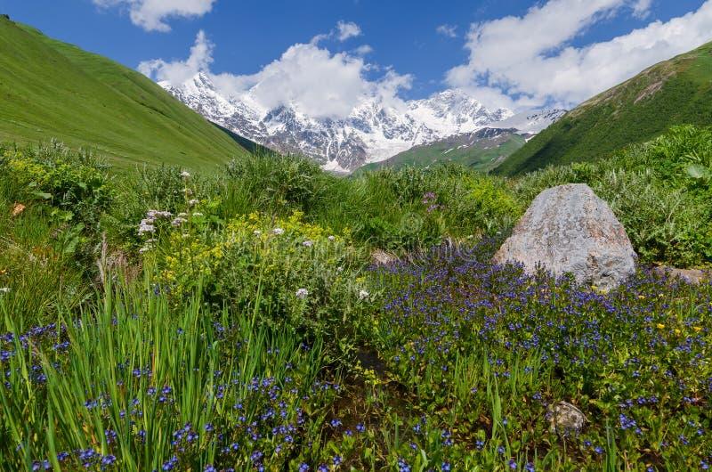 Paysage d'été avec une vallée de floraison de montagne photos stock