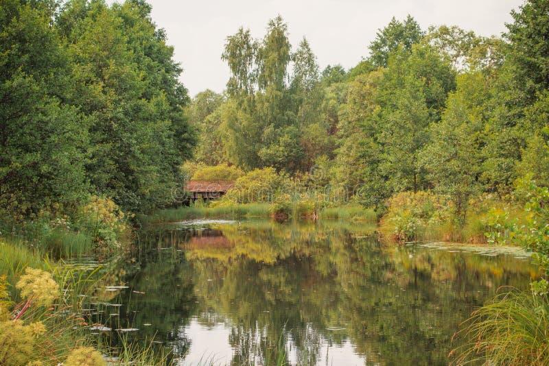 Paysage d'été d'automne photo stock