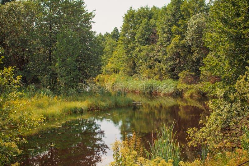 Paysage d'été d'automne images libres de droits
