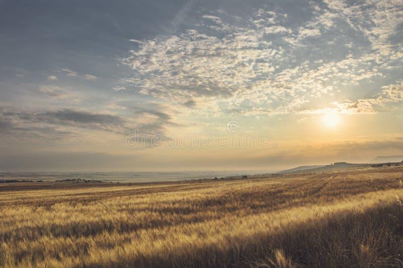 Paysage d'été d'un champ de blé photographie stock