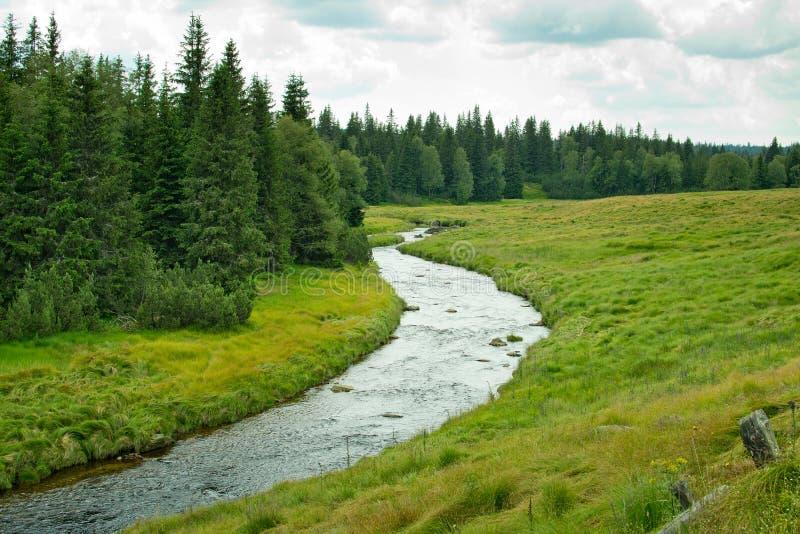 Paysage d'été dans la forêt de Bohème photographie stock libre de droits